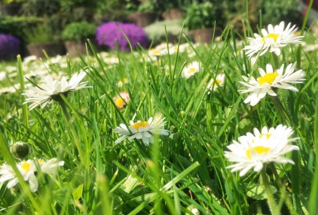 Blomstertiden_kl