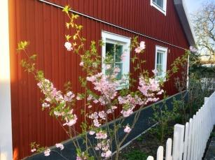 Schwedenhaus_03_17 4